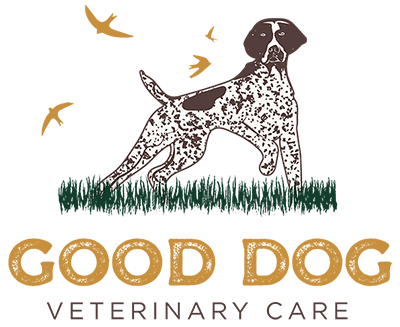 Good Dog Veterinary Care